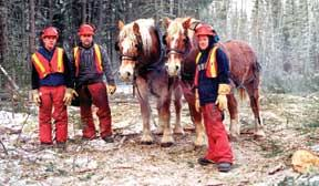 horse logging equipment