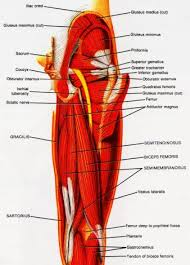 hamstring muscle strain