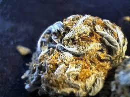 auto flower cannabis