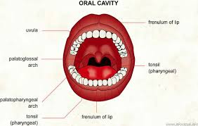 picture of cavity