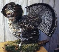 grouse mount