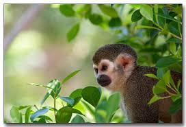 rainforest animals monkeys