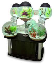aquariums tropical fish