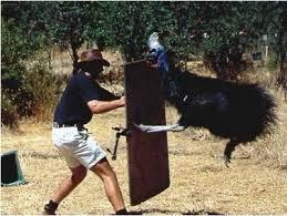 cassowary attacks