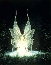 light creatures