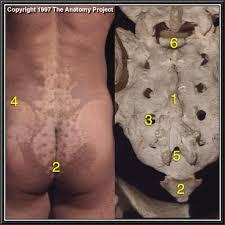 sacral crest