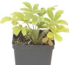 hydroponics plants