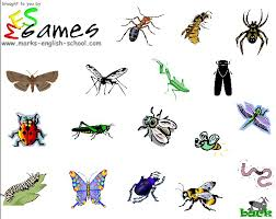 bugs and insect pictures