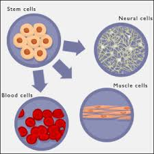 cells of the human body