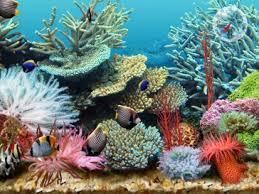 3d tropical fish aquarium