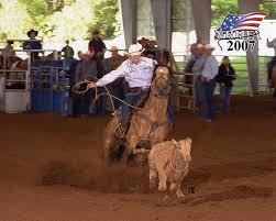 calf roping horses