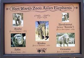 asian elephant food chain
