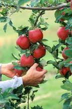 organic orchards