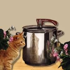 kedi sesleri