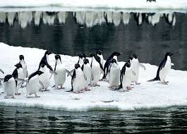 penguins and global warming