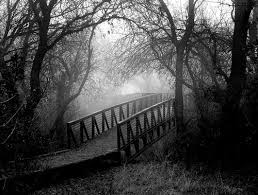 black and white nature images