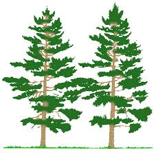 clipart of plants