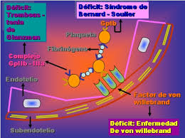 hemostasia primaria