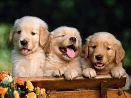 dogs animals