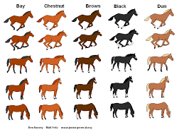 bay colored horses