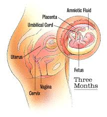 pictures of first trimester
