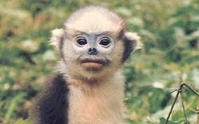 extinct monkey