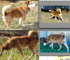 dogs breeds pictures