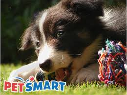 printable instore petsmart coupons 2010