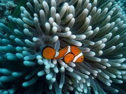 barrier reef photo