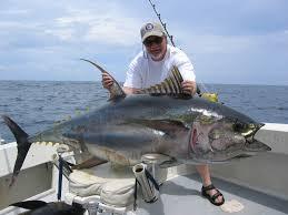 marlin fishing game
