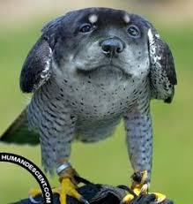 dog bird