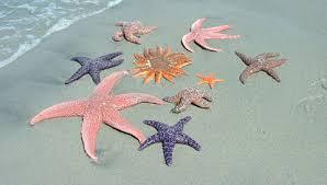 kinds of starfish