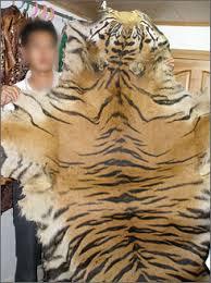 bengal tigers endangered