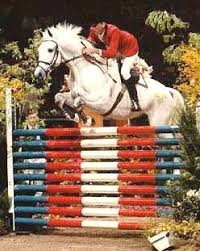 show jumping jumps