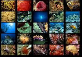 animals under the ocean
