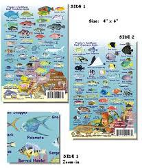 caribbean fish species