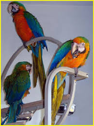 macaw perch