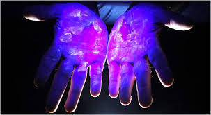 bacteria on your hands