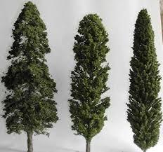cypress conifer