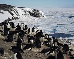 adelie penguins habitat