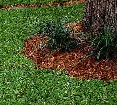 centipede turf