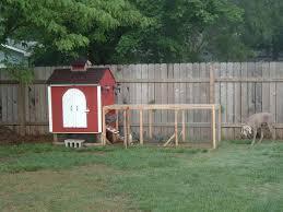 back yard chicken coops