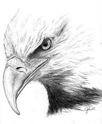 clip art of an eagle