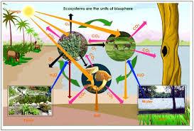 ecosystem animal