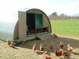 chicken huts