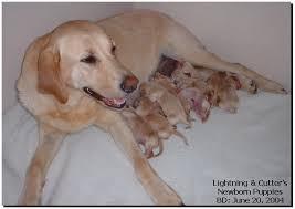 new born puppies