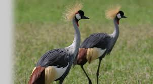 birds kenya