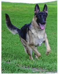 best breed of dog