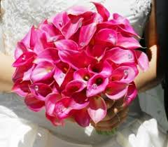pink calla lily bouquets
