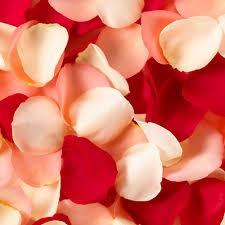 external image petals500.jpg
